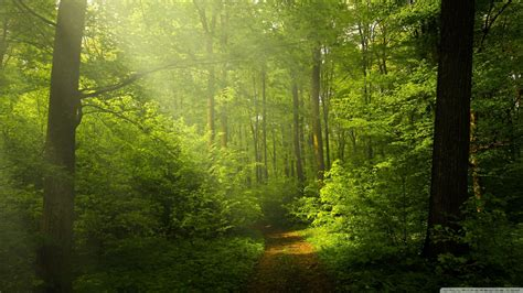 Green Forest Image Desktop by Beautiful Nature Image Green Forest 4k Hd Desktop