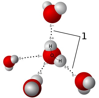 File3d Model Hydrogen Bonds In Waterg  Wikimedia Commons. Hotel Alpenroyal. San Antonio Hotel. Beaumonte Guesthouse. Schwarzwald-Hotel Gengenbach. The Hotel Brussels. TRYP Jerez Hotel. Coral Beach Rotana Resort Montazah. The Relish Hotel