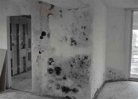 black mold pictures symptoms removal health effects