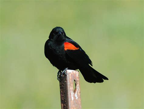 orange bird names related keywords orange bird names