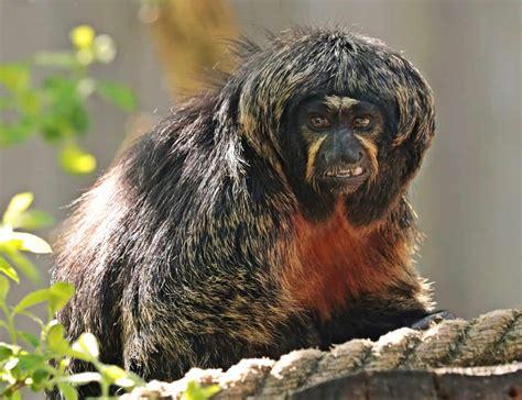 รูปภาพฟรี: ลิง, คณะ, สัตว์ป่า,, ธรรมชาติ
