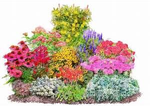 Online Pflanzen Kaufen : pflanzenset vielf ltiger staudenreigen 12 pflanzen online kaufen otto ~ Watch28wear.com Haus und Dekorationen