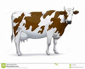 Cow Cartoons  Illustrations  U0026 Vector Stock Images