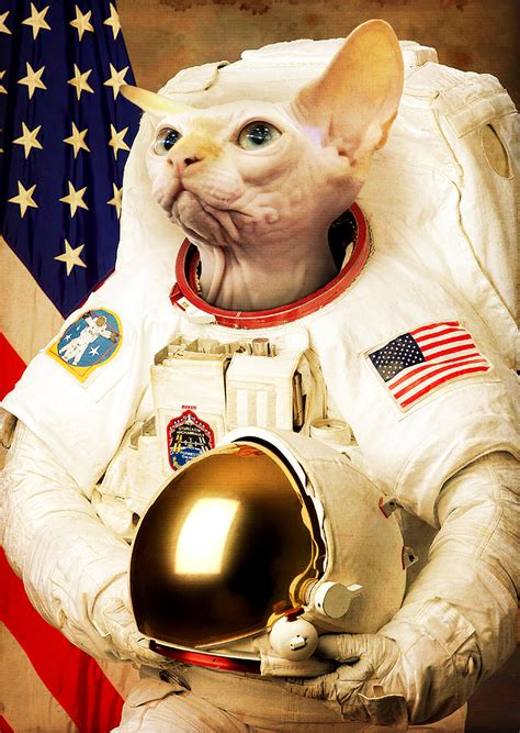 cat astronaut wallpaper wallpapersafari
