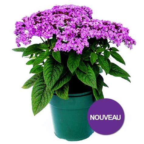 fleurs annuelles ombre