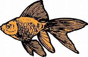 Goldfish Clip Art at Clker.com - vector clip art online ...