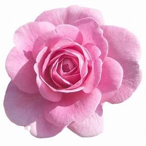 Pot De Fleur Transparent : nature fleurs roses page 5 ~ Teatrodelosmanantiales.com Idées de Décoration