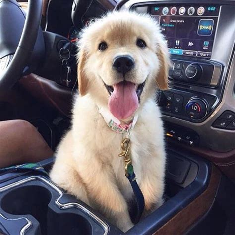 14 Things That Make Golden Retrievers Happy