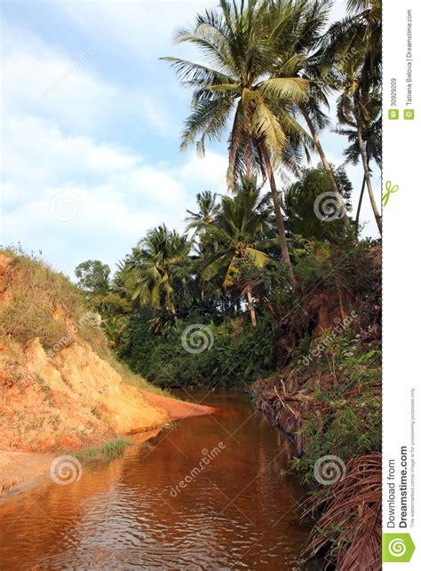 landscape  palm tree  red river vietnam royalty