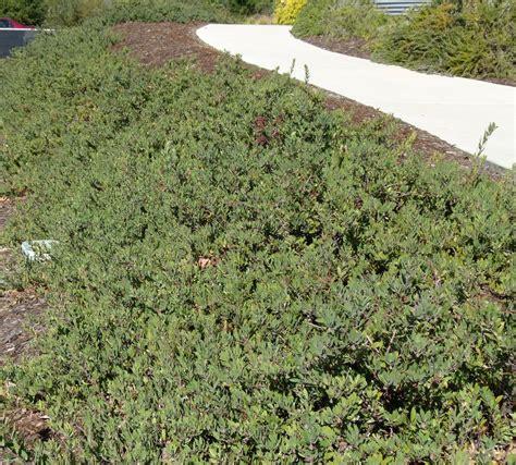 California Native Plant Ground Cover Plants