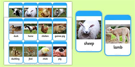 mothers   young farm animals photo flash cards