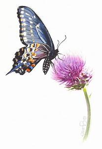 Contemporary Realism: Butterfly on Canada Thistle ...