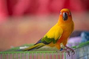 Are Bird Droppings Beneficial To Plants: Using Bird ...