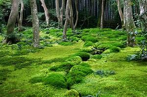 Book Feature  The Magical World Of Moss Gardening