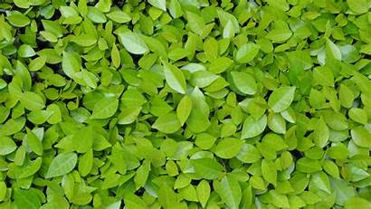 Leaves Background 4k Wallpapers Nature Resolution Cool