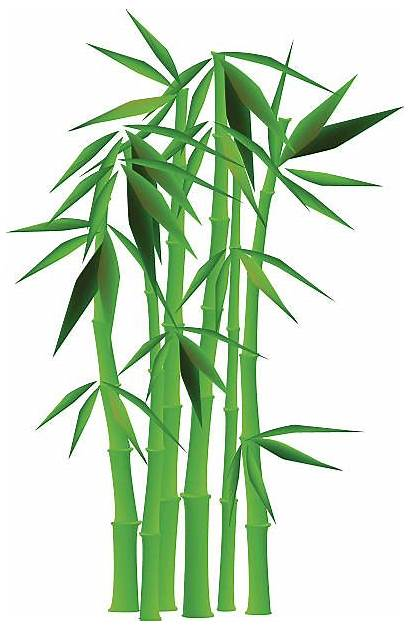 Bamboo Clipart Tree Bill Library