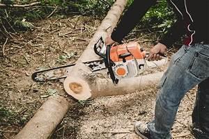 Abattage D Arbres Autorisation : prix d 39 un abattage arbre guide complet sur le budget ~ Premium-room.com Idées de Décoration