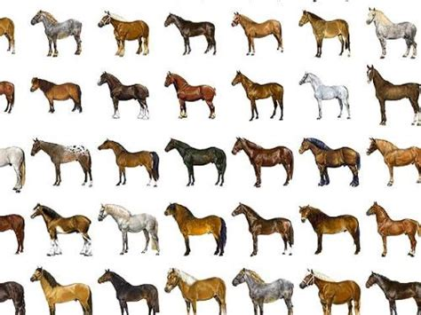 Different Horse Breeds