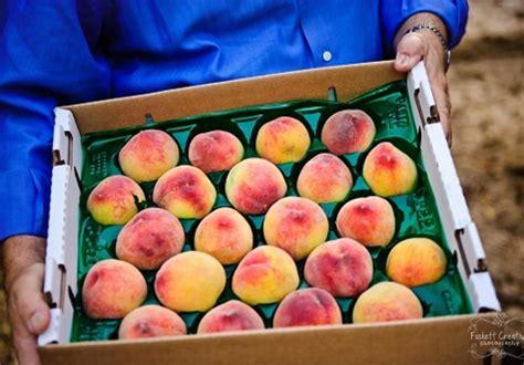 Peach Festival Schnepf Farms