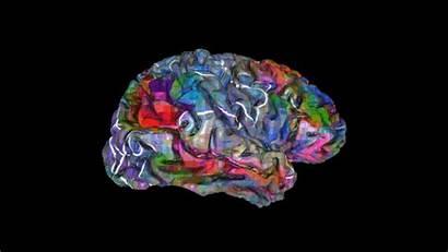 Atlas Brain 3d Semantic Words Animation Visual