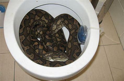 se masturbe dans les toilettes alors qu est aux toilettes une femme se fait mordre par un serpent