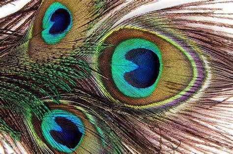 Putnu spalvu struktūra. Spalvu veidi