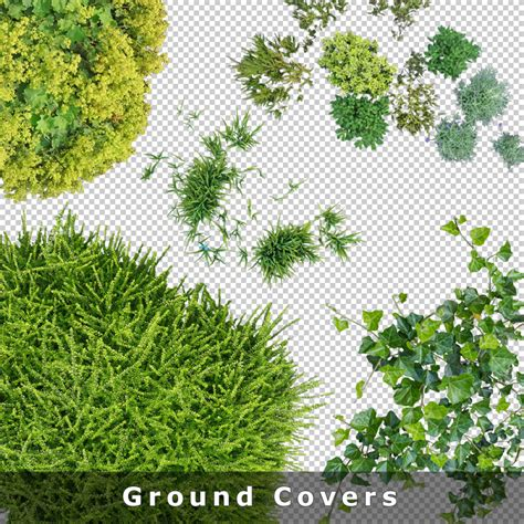 home floor plans free top view plants 01 cutout plan view plant graphics png