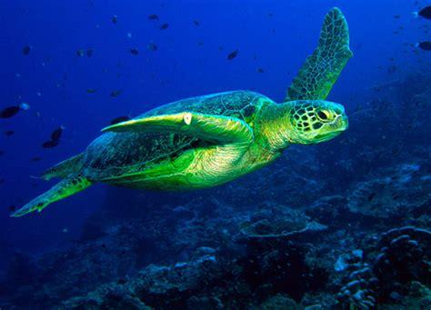 gulf spill animals affected howstuffworks