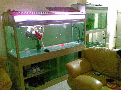 aquarium air tawar aquascape aquarium kuras