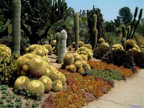 cactus garden cactus garden landscape ideas car interior design