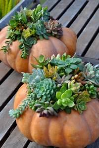 How-to Create a Succulent Pumpkin Planter Make Flower