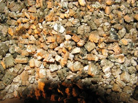 vermiculite border home  property inspections