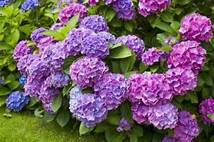 Hortensien Vermehren Durch Stecklinge : 10 pflanzen die man leicht durch stecklinge vermehren ~ Lizthompson.info Haus und Dekorationen