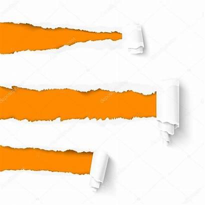 Strappata Carta Paper Vettoriale Torn Scroll Pergamena