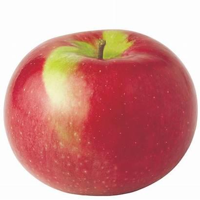 Apple Varieties Delicious Mcintosh