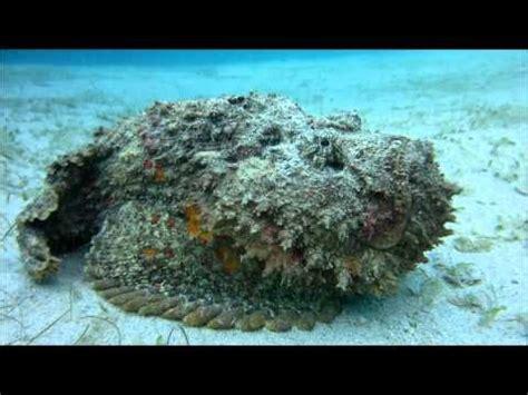 Zemūdene.: Akmens zivs