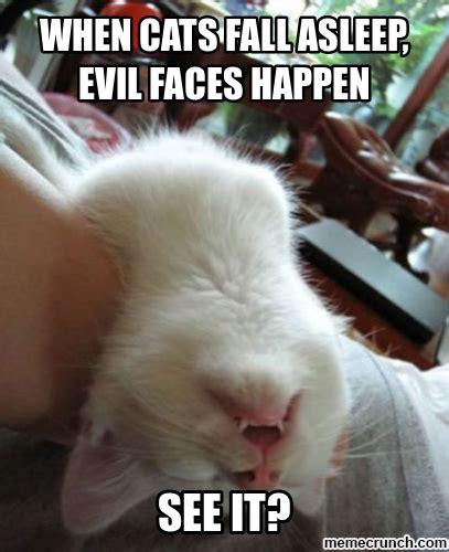 Evil Face Meme - evil cat meme pictures to pin on pinterest pinsdaddy