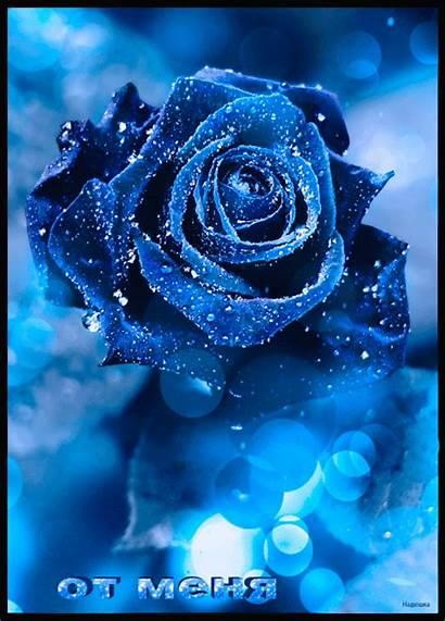 Flowers Roses Rose Amazing Flower Gothic Garden
