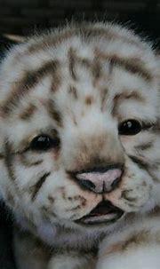 LOL Cute Animals | Baby animals, Cute baby animals, Cute ...