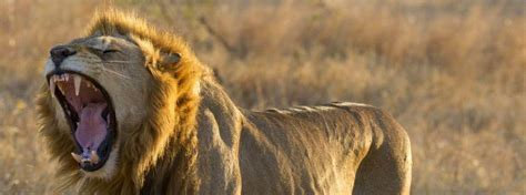 African Safari Guide  South Africa Safaris  Kenya. High Interest Checking Account. Laser Eye Surgery Price Comparison. Expense Reporting Software Eloqua Vs Marketo. Social Work Qualifications Bryan College Mba. Fashion Colleges In Georgia We Buy Cars Ny. Countdown Clock For Windows Live Sales Chat. Online Degrees For Accounting. Drawing Websites For Beginners