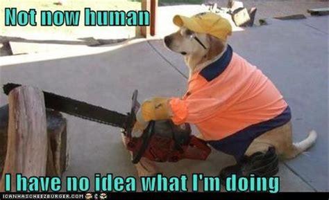 No Idea Meme - i have no idea what i m doing meme 23 dump a day
