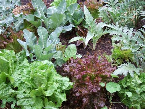 pictures of vegetable plants growing vegetables in a small garden plot veggie gardening tips