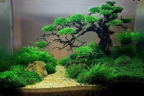 Underwater Bonsai By Trung Kala