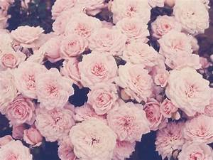 Tumblr Flowers | tumblr hintergruende tumblr backgrounds ...