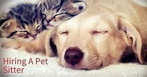 Hire a pet sitter pet sitter cat sitter dog sitter for Babysitter dog sitter