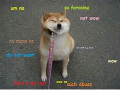 doge the best of the d...