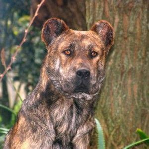 big breeds that don t shed beautiful beautiful dogs and sheds on