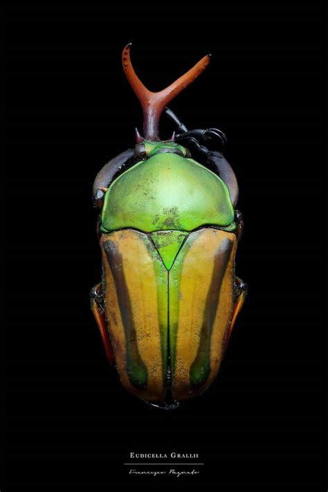 colorful insect macro photography  francesco bagnato