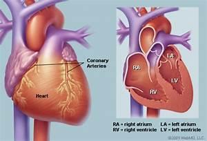 Human Heart  Anatomy   Diagram  Function  Chambers