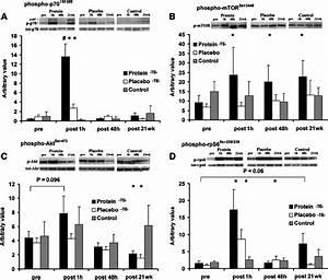 Phosphorylation Of P70 S6k On Thr 389  P